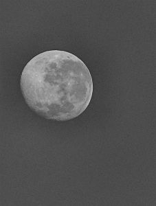 Luna del conejo